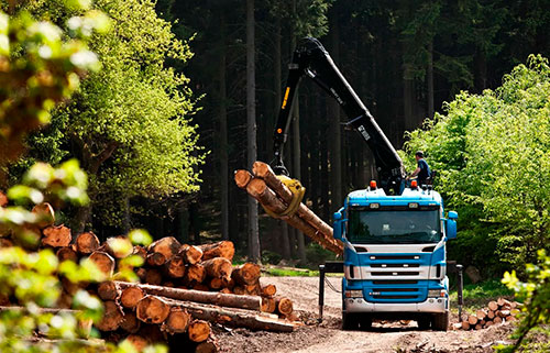 Аренда манипулятора для перевозки деревьев в Москве и МО