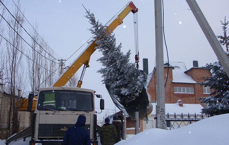 Перевозка деревьев манипулятором в Москве
